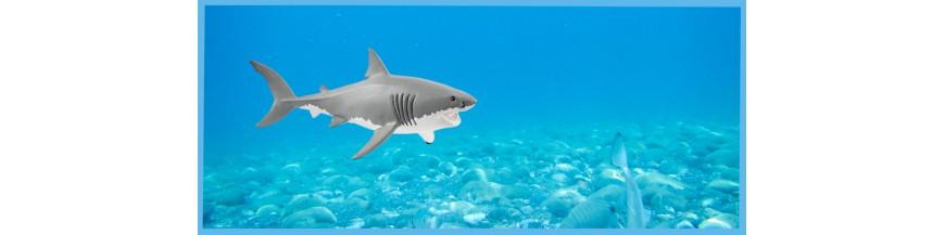 Animali Sottomarini