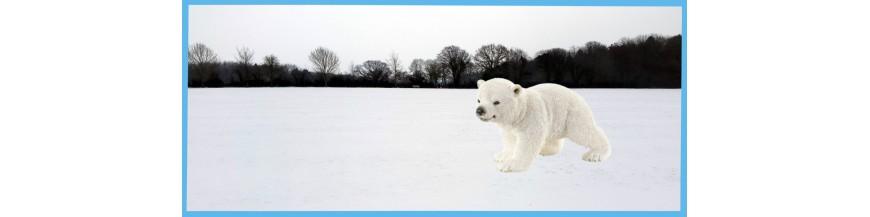 Noordpool dieren